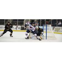 South Carolina Stingrays Forward Jake Kamrass controls the puck in front of the Atlanta Gladiators net