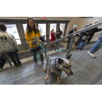 Fans arrive for Milwaukee Admirals' Purina Dog Day Afternoon