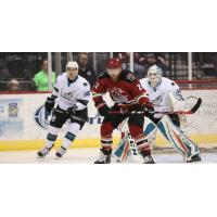 Tucson Roadrunners Forward Pierre-Cedric Labrie vs. the San Jose Barracuda