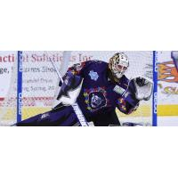 Reading Royals Goaltender Mark Dekanich