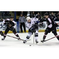 Vancouver Giants surround the Victoria Royals