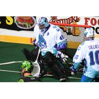 Rochester Knighthawks goalkeeper Matt Vinc stands tall vs. the Saskatchewan Rush