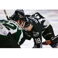AJ White of the Idaho Steelheads