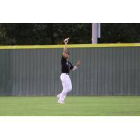 Texarkana Twins make a catch in the outfield