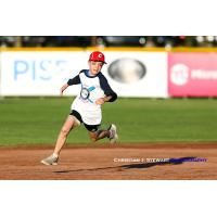 Dexter Bernoties races around the bases during the Victoria HarbourCats mascot race Monday