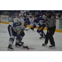 Sudbury Wolves Training Camp