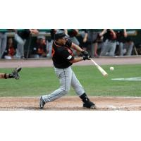 Dioner Navarro of the Long Island Ducks makes contact