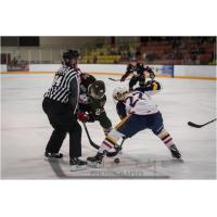 Niagara IceDogs battle the Barrie Colts in preseason action