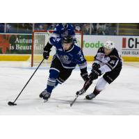 Brayden Watts of the Vancouver Giants (34) reaches for the puck vs. the Victoria Royals