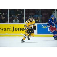 Sarnia Sting rookie forward Jacob Perreault