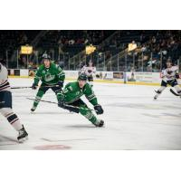 Florida Everblades forward Joe Cox