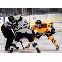 Norfolk Admirals RW Ben Duffy (12) faces off with the Manchester Monarchs