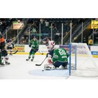 Florida Everblades rookie goaltender Jeremy Helvig