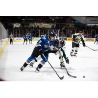 Utah Grizzlies attempt to cut off the Idaho Steelheads