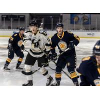 Norfolk Admirals vs. the Wheeling Nailers