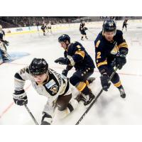 Norfolk Admirals skirmish with the Wheeling Nailers