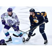 Norfolk Admirals forward Darik Angeli (right)