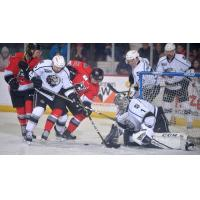 Manchester Monarchs goaltender Charles Williams tries to keep the Adirondack Thunder at bay