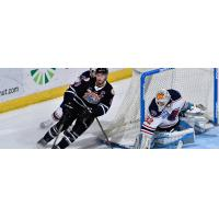 South Carolina Stingrays goaltender Gordon Defiel against the Orlando Seal Bears