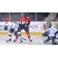 Adirondack Thunder forward Alexandre Carrier tests the Manchester Monarchs goaltender