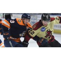 Greenville Swamp Rabbits battle the Atlanta Gladiators