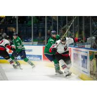 Florida Everblades battle the Adirondack Thunder