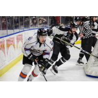 Utah Grizzlies vs. the Kansas City Mavericks behind the net