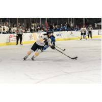 Norfolk Admirals forward Domenic Alberga