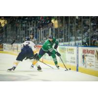 Florida Everblades right wing Grant Arnold (right) against the Norfolk Admirals