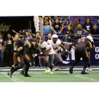 Arizona Rattlers quarterback Jeff Ziemba drops back to pass vs. the Sioux Falls Storm