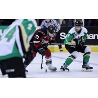 Vancouver Giants right wing Jared Dmitriw with the puck against the Prince Albert Raiders