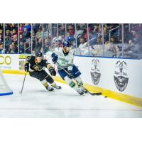 Florida Everblades vs. the Newfoundland Growlers