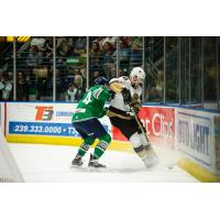 Florida Everblades battle the Newfoundland Growlers