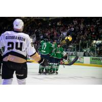 Florida Everblades celebrate a Blake Winiecki goal against the Newfoundland Growlers
