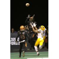 Allen Chapman of the Arizona Rattlers jumps to catch the ball against the Tucson Sugar Skulls