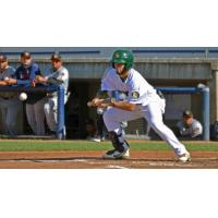 Beloit Snappers lay down a bunt