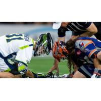 Chesapeake Bayhawks face off with the Dallas Rattlers