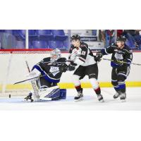 Vancouver Giants centre Evan Patrician in front of the Victoria Royals goal