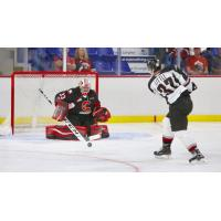 Vancouver Giants centre John Little takes a shot vs. the Prince George Cougars