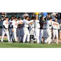 Long Island Ducks celebrate a walk-off win