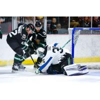 Mike Economos of the Utah Grizzlies vs. the Idaho Steelheads