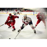 Springfield Thunderbirds battle the Charlotte Checkers