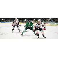 South Carolina Stingrays defenseman Tommy Hughes (right) vs. the Florida Everblades