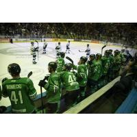 Florida Everblades bench watches the action against the Jacksonville IceMen