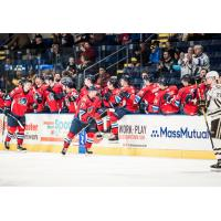 Springfield Thunderbirds receive congratulations from their bench