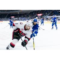 Belleville Senators vs. the Toronto Marlies