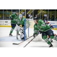 Florida Everblades forward Zach Magwood vs. the Orlando Solar Bears