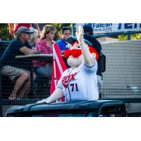 St. Cloud Rox mascot Chisel waves to the crowd