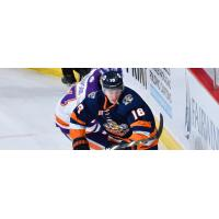 Forward Adam Rockwood with the Greenville Swamp Rabbits