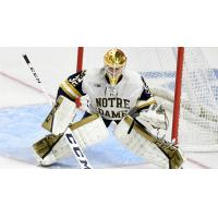 Cale Morris in goal for Notre Dame